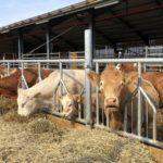 Rådde Gård en försöksgård med integrerad dikalvsproduktion